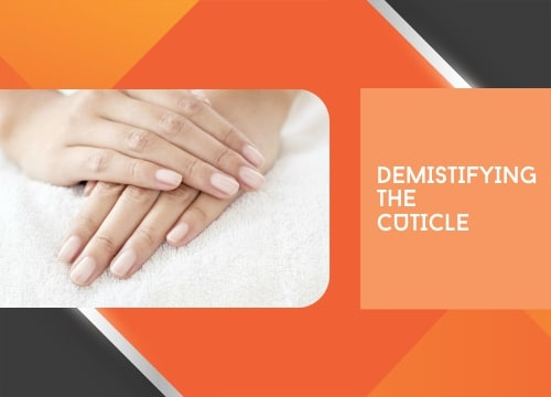 Demistifying the cuticle