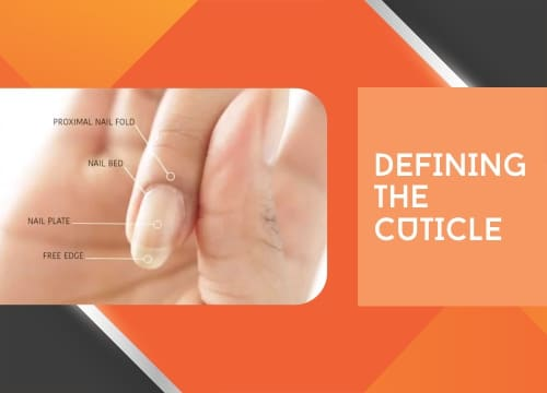 defining the cuticle